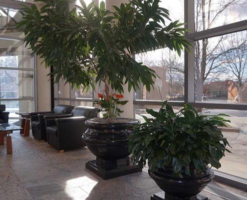 Interior greenscapes plant design boise idaho (115)